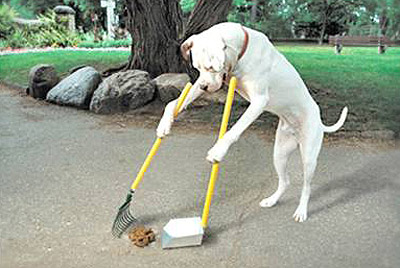 Ritter Rules For Leaving your Dog's Poop on the Ground